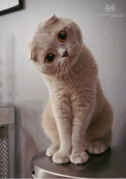 20 of the World's Most Expensive Cats – Page 12 – Taboo News