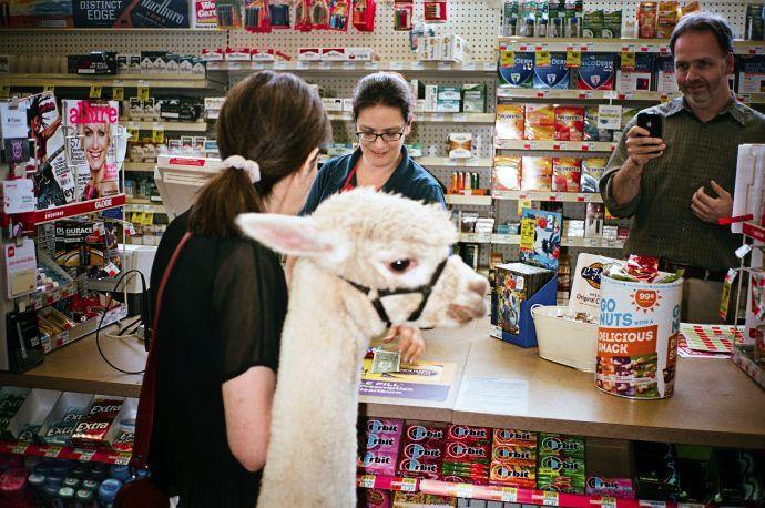 Author and her alpaca. Image Courtesy of newyorker.com.