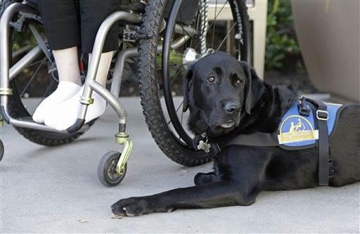 Wallis Brozman and his service dog Caspin in Santa Rosa, California. Image Courtesy of nbcnews.com